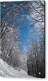 Winter Road Acrylic Print by Evgeni Dinev