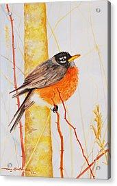Winter Robin Acrylic Print
