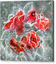 Winter Roses And Cardinals Acrylic Print by Carol Cavalaris
