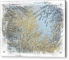 Winter Scenic Acrylic Print