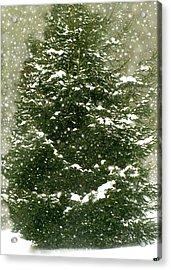Winter Shines Over Pine Acrylic Print