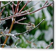 Winter Solstice Hummer Acrylic Print