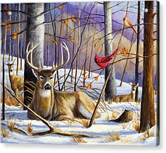 Winter Song Acrylic Print by Michael Scherer