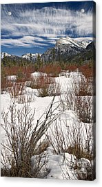 Winter Spice Acrylic Print by Royce Howland