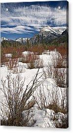 Winter Spice Acrylic Print