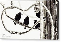Winter Starlings Acrylic Print by Don Durfee