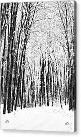 Winter Startk Acrylic Print