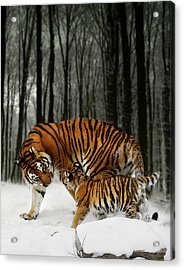 Winter Stroll Acrylic Print by Julie L Hoddinott