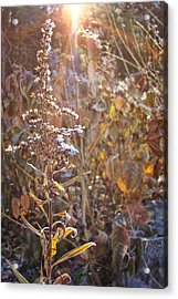 Winter Sun Texture Acrylic Print by JAMART Photography
