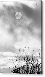 Winter Sun Acrylic Print by Randall Paar