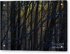 Winter Sunrise Acrylic Print by Diane Diederich
