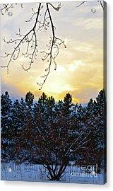 Winter Sunset On The Tree Farm #2 Acrylic Print