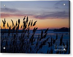 Winter Sunset  Acrylic Print by Paula Guttilla