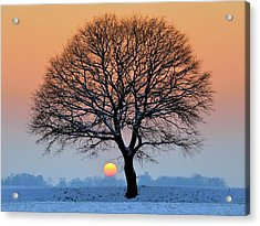 Winter Sunset With Silhouette Of Tree Acrylic Print