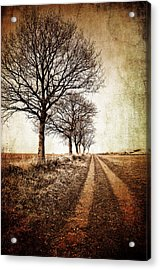 Winter Track With Trees Acrylic Print by Meirion Matthias