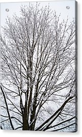 Winter Tree    Poster Acrylic Print
