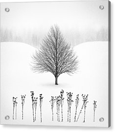 Winter Tree #13 Acrylic Print by Matt Anderson