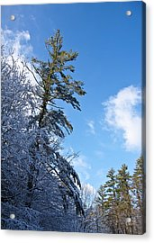 Winter Tree And Sky Acrylic Print by Edward Myers