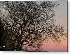 Winter Tree At Sunset Acrylic Print by Phyllis Tarlow
