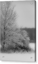 Winter Tree Acrylic Print
