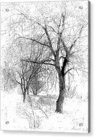 Winter Tree In Field Of Snow Sketch Acrylic Print by Randy Steele