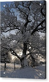 Winter Tree In North Wales Acrylic Print by Harry Robertson