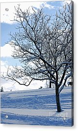 Acrylic Print featuring the photograph Winter Tree by Lila Fisher-Wenzel