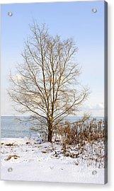 Winter Tree On Shore Acrylic Print by Elena Elisseeva