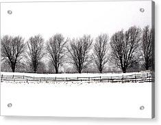 Acrylic Print featuring the photograph Winter Treeline by Don Nieman