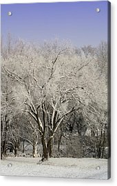 Acrylic Print featuring the photograph Winter Trees by Diane Merkle