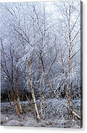 Acrylic Print featuring the photograph Winter Trees by Jacqi Elmslie