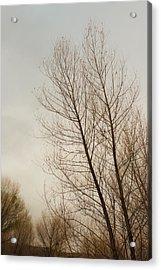 Winter Trees Acrylic Print by Joseph Smith
