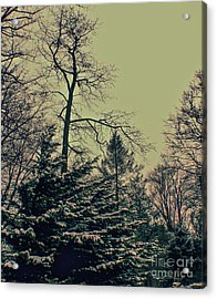 Acrylic Print featuring the photograph Winter Trees by Sandy Moulder