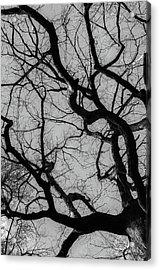 Winter Veins Acrylic Print