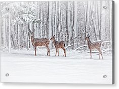 Winter Visits Acrylic Print