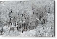 Winter Walk Acrylic Print