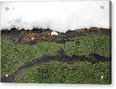 Winter Watercress Acrylic Print by Indigo Schneider