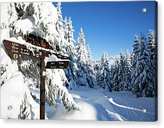 winter way in the Upper Harz Acrylic Print