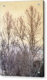 Winter Whisper In The Trees Acrylic Print