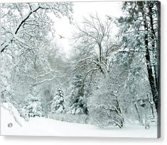Winter Whisper Acrylic Print by Jessica Jenney