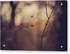 Acrylic Print featuring the photograph Winter Whispers by Shane Holsclaw