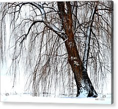 Winter Willow Acrylic Print