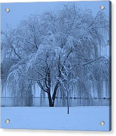 Winter Willow Tree Before Dawn_fort Worth_tx Acrylic Print by Barbara Yearty
