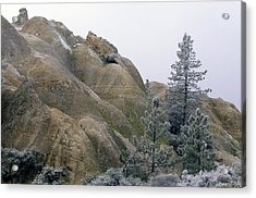 Winter Wind Acrylic Print by Soli Deo Gloria Wilderness And Wildlife Photography