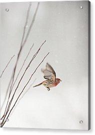 Winter Wind Surfing 1 Acrylic Print