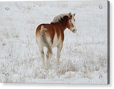 Winter Winds Acrylic Print