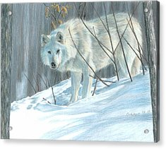 Winter Wolf Acrylic Print