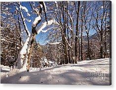 Winter Wonderland 1 Acrylic Print by Rudi Prott