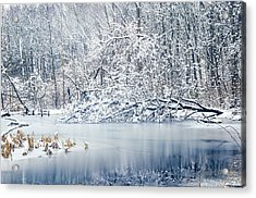 Winter Wonderland 2 Acrylic Print