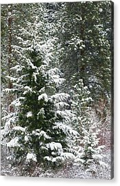 Acrylic Print featuring the photograph Winter Woodland by Will Borden